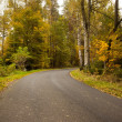 Country road along trees in lush forest — Stock Photo #36245295