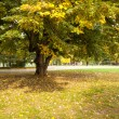 Large tree on meadow in the park — Stock Photo
