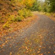Leaves on tarmac curved country road along trees — Stock Photo