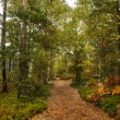 Stock Photo: Scenic view of walkway along lush forest