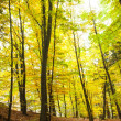 Trees in the autumnal forest — Stockfoto