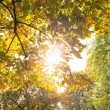 Branches and autumnal leaves against the sunlight — Stockfoto