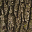 Brown rough bark — Stock Photo