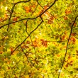 Branches and leaves — Stock Photo