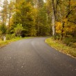 Country road along trees in lush forest — Stock Photo #36249517