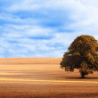 Sunny brown landscape — Stock Photo