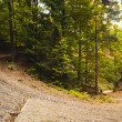 Stock Photo: Tarmac curved country road in forest