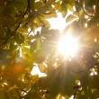 Stock Photo: Autumnal leaves and sunlight