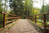 Bridge with railings leading towards forest — Fotografia Stock