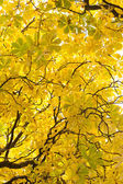 Branches and autumnal leaves — Stock Photo