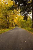 Country road along trees in the lush forest — Stock Photo