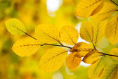 Autumnal leaves against blurred plants — Stock Photo
