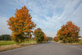 Empty tarmac country road along trees and landscape — Stock Photo