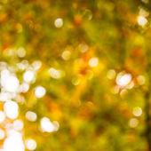 Defocused leaves — Stock Photo