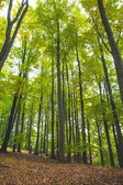 Lush trees in the forest — Stock Photo