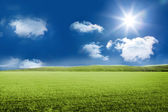 Sunny green landscape — Stock Photo