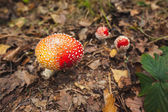 Mushroom on forest ground — Stock Photo