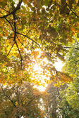 Branches and autumnal leaves against the sunlight — Stock Photo