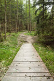 Wooden walkway along forest — Stock Photo