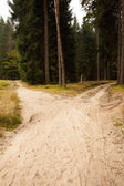 Narrow dirt road leading to two different track along trees — Stock Photo