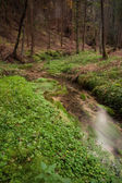 Narrows stream flowing along in forest — Stock Photo