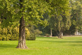 Trees and meadow — Stock Photo