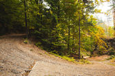 Tarmac curved country road in forest — Stock Photo