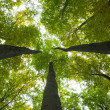 Stock Photo: Low angle view of tall trees