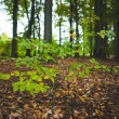 Young plant against tree trunks in forest — Stock Photo