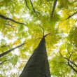 Low angle view of tall trees — Stock Photo #36250791