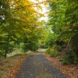 Scenic shot of narrow road along lush forest — Stock Photo #36250839