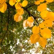 Autumnal leaves against plants — Stock Photo