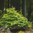 Plant against tree trunks in the forest — 图库照片
