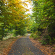 Scenic shot of narrow road along forest — Stock Photo