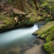 Rapids flowing along lush forest — Stock Photo #36252725