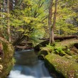Stock Photo: Rapids flowing along lush forest