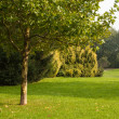 Trees and meadow — Stockfoto