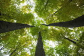 Low angle view of tall trees — Stock Photo