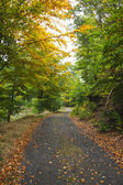 Scenic shot of narrow road along lush forest — Stock Photo