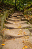 Close up of narrow walkway in forest — Stock Photo