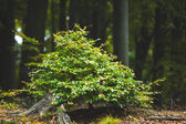 Plant against tree trunks in the forest — Stock Photo