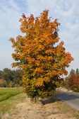 Large autumnal tree against the sky — Stock Photo