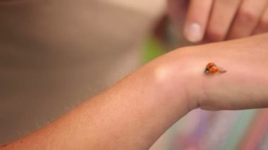 Ladybug crawling over girls hand — Stock Video