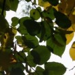 Stock Video: Sunlight streaming through leaves