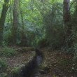 Stock Video: Stream flowing through wooded area