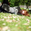 Stock Video: Peaceful napping redhead lying on green lawn