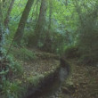 Stock Video: Stream flowing through forest