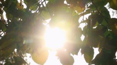 Sunlight shining through the leaves — Stock Video