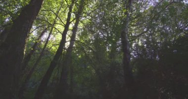 Peaceful wooded area — Stock Video