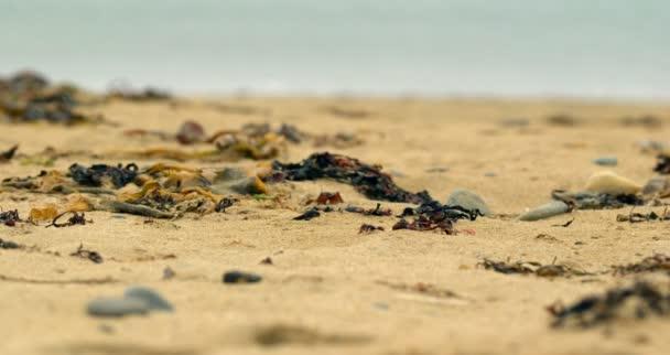 Focus sur les algues et de cailloux sur la plage — Vidéo